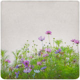 Wildflower meadow background Royalty Free Stock Photography