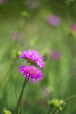 Wildflower meadow close up landscape in Summer Stock Image
