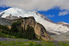 Wildflower meadow and Emmons glacier. Mount Rainier National Park royalty free stock photo