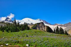 Wildflower meadow and Emmons glacier. Mount Rainier National Park stock images