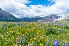 Free Wildflower Meadow In Waterton Lakes National Park, Canada Stock Photo - 127042540