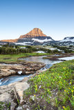 Wildflower meadow at Logan Pass, Glacier National Park, MT Stock Image