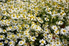 Wildflower meadow Stock Photo