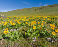 Wildflower meadow with native plants Royalty Free Stock Images