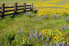 Wildflower meadow with native plants Royalty Free Stock Image