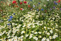 Wildflower meadow Stock Photography