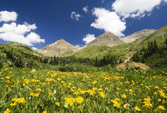 Wildflower meadow, Yankee Boy Basin, Colorado Royalty Free Stock Images
