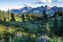 Wildflower Meadows and Tatoosh Range Stock Photo