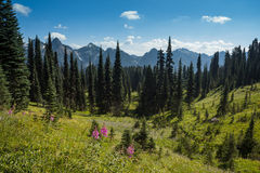 Wildflower Meadows and Tatoosh Range Royalty Free Stock Photo