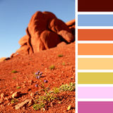 Wildflower in Monument Valley palette Stock Photos