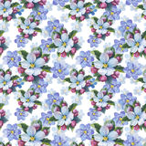 Wildflower myosotis flower pattern in a watercolor style isolate royalty free stock photo