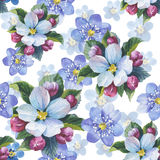 Wildflower myosotis flower pattern in a watercolor style isolate Stock Photography