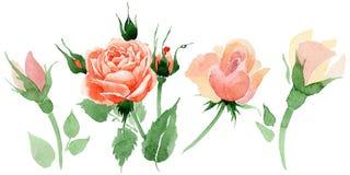 Wildflower nam bloem in een geïsoleerde waterverfstijl toe vector illustratie