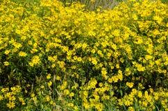 Wildflower no fim do verão Imagem de Stock Royalty Free