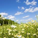 Wildflower no prado fotografia de stock