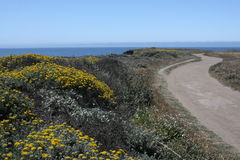 Wildflower & Ocean Trail Stock Photos