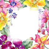Wildflower orchid flower frame  in a watercolor style. Royalty Free Stock Photos