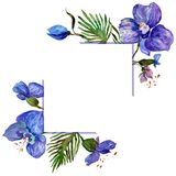 Wildflower orchid flower frame in a watercolor style. Stock Photos