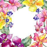 Wildflower orchid flower frame  in a watercolor style. Stock Photography