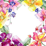 Wildflower orchid flower frame  in a watercolor style. Royalty Free Stock Image
