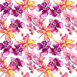Wildflower orchid flower pattern in a watercolor style. Royalty Free Stock Image