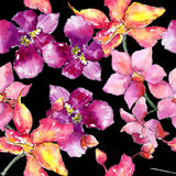 Wildflower orchid flower pattern in a watercolor style. Stock Photography