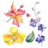 Wildflower orchid flower in a watercolor style isolated. Royalty Free Stock Photos