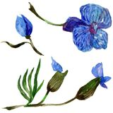 Wildflower orchid flower in a watercolor style isolated. Royalty Free Stock Image