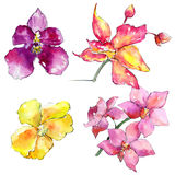Wildflower orchid flower in a watercolor style isolated. Royalty Free Stock Images