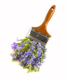 Wildflower paintbrush. Non-toxic paint concept Royalty Free Stock Photography