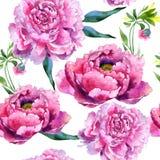 Wildflower peoni menchii kwiatu wzór w akwarela stylu Fotografia Stock