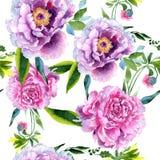 Wildflower peoni menchii kwiatu wzór w akwarela stylu Obrazy Royalty Free