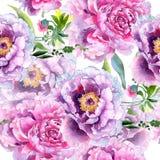 Wildflower peoni menchii kwiatu wzór w akwarela stylu Zdjęcia Royalty Free