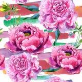 Wildflower peoni menchii kwiatu wzór w akwarela stylu Obraz Royalty Free