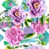Wildflower peoni menchii kwiatu wzór w akwarela stylu Obraz Stock
