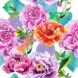 Wildflower peoni menchii kwiatu wzór w akwarela stylu Zdjęcie Royalty Free