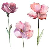 Wildflower pink flax. Floral botanical flower. Isolated illustration element. Aquarelle wildflower for background, texture, wrapper pattern, frame or border Royalty Free Stock Image