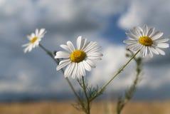 Wildflower - Podien stockbilder