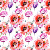 Wildflower poppies flower pattern in a watercolor style. Full name of the plant: poppies. Aquarelle wild flower for background, texture, wrapper pattern, frame Stock Photography