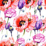 Wildflower poppies flower pattern in a watercolor style. Full name of the plant: poppies. Aquarelle wild flower for background, texture, wrapper pattern, frame Stock Photo