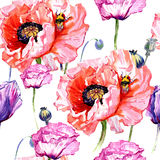 Wildflower poppies flower pattern in a watercolor style. Full name of the plant: poppies. Aquarelle wild flower for background, texture, wrapper pattern, frame Stock Image