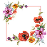Wildflower poppy flower frame in a watercolor style isolated. Royalty Free Stock Photography