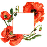 Wildflower poppy flower frame in a watercolor style isolated. Stock Photo