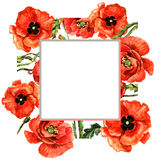 Wildflower poppy flower frame in a watercolor style isolated. Royalty Free Stock Image