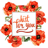Wildflower poppy flower frame in a watercolor style isolated. Royalty Free Stock Photo