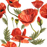 Wildflower poppy flower pattern in a watercolor style . Full name of the plant: poppy, papaver,  opium. Aquarelle wild flower for background, texture, wrapper Stock Images