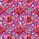 Wildflower poppy flower pattern in a watercolor style. Royalty Free Stock Images