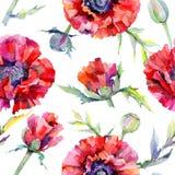 Wildflower poppy flower pattern in a watercolor style. Stock Photo