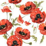 Wildflower poppy flower pattern in a watercolor style isolated. Full name of the plant: poppy, papaver,  opium. Aquarelle wild flower for background, texture Stock Photography