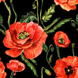 Wildflower poppy flower pattern in a watercolor style isolated. Stock Photography